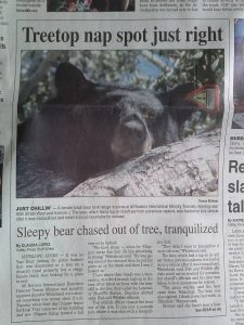 The front page of the Antelope Valley Press the Wednesday edition, our local paper.